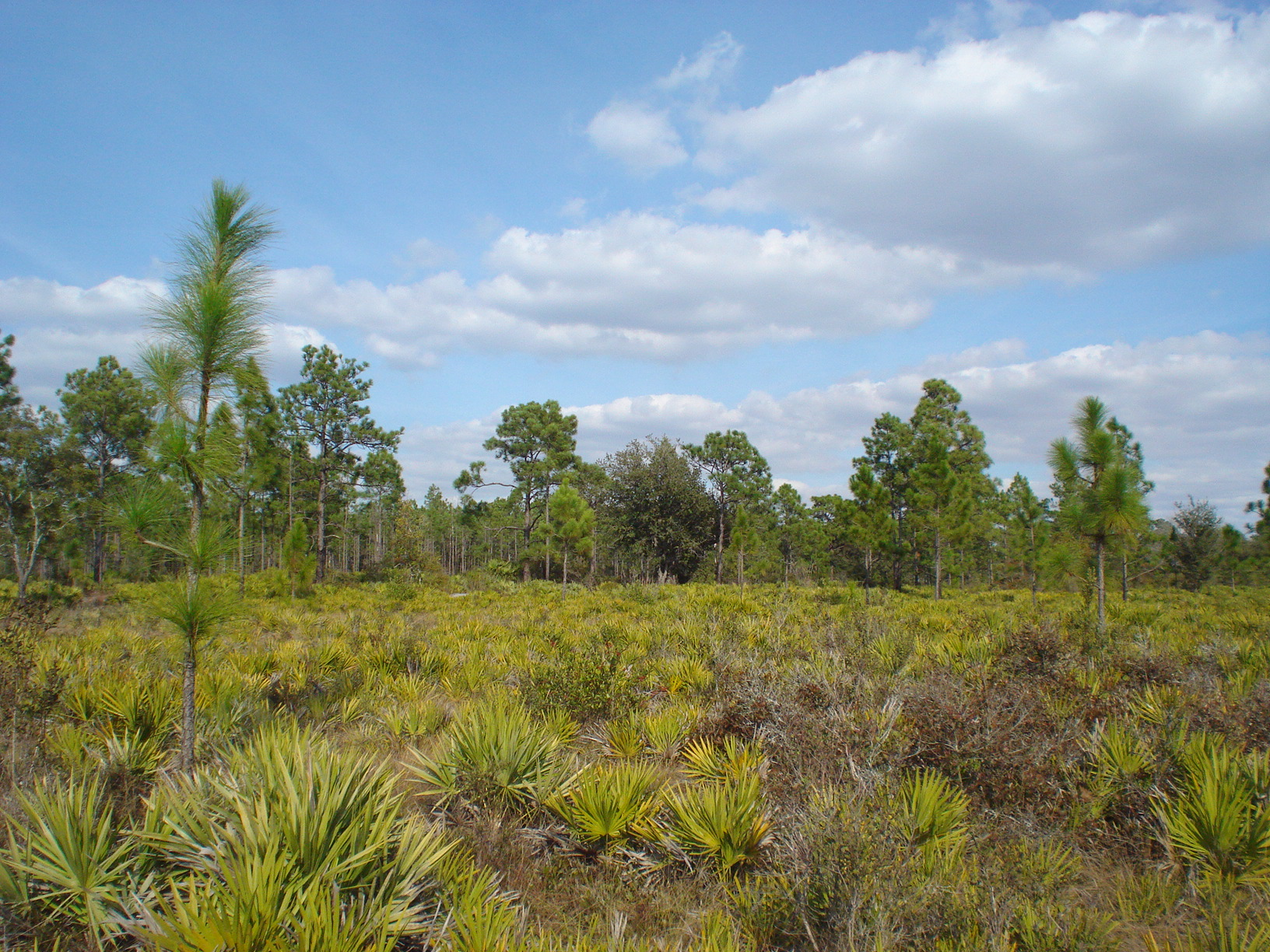 Holopaw Florida Suburban Estates FL Dry lot for sale